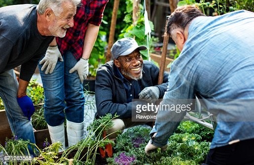 Group of people planting vegetable in greenhouse : Foto stock