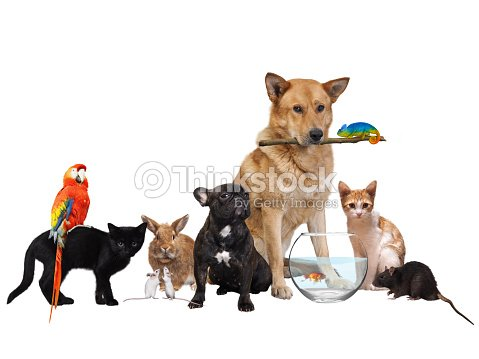 Group of Pets. Isolated on white background : Stock Photo