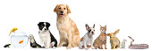 Group of pets sitting in front of white background.