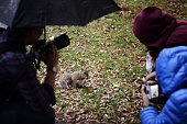 Group of photographers taking photos of a squirrel