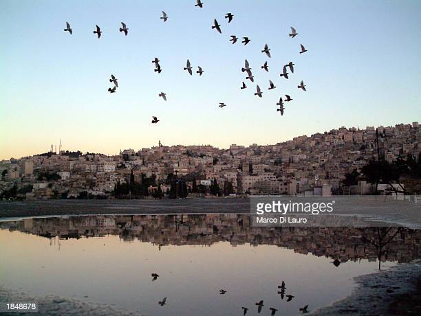 A group of pigeons fly over the sky of the capital of March 14 2003 in Amman Jordan