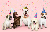 Group of puppies celebrating a new year