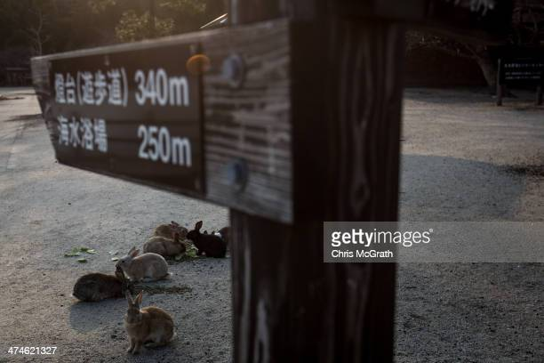 A group of rabbits are seen eating under a sign post on Okunoshima Island on February 24 2014 in Takehara Japan Okunoshima is a small island located...