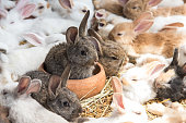 Group of Rabbits resting in pet shop and wait for buyer. Animal and Lovely pets concept