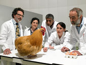 Group of scientists examine chicken in laboratory