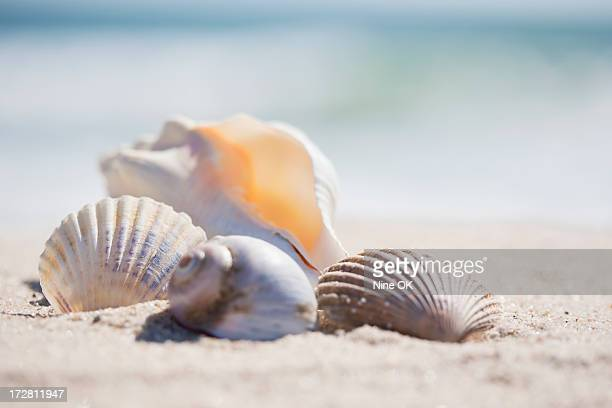 Group of sea shells on beach