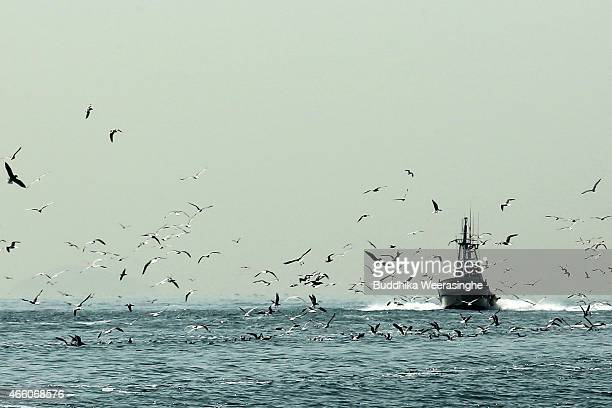 A group of seagulls fly beside the sand lance harvesting vessels at the Mega fishing port on March 13 2015 in Himeji Japan A large number of seagulls...