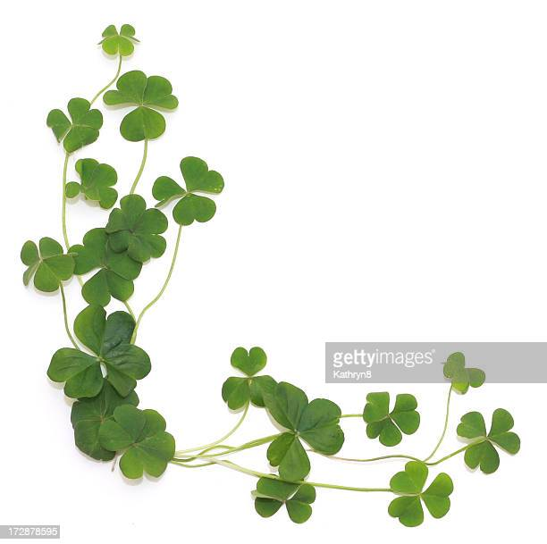 Group of shamrocks in corner on white background