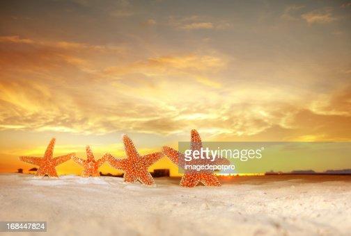group of starfish on beach over sunset