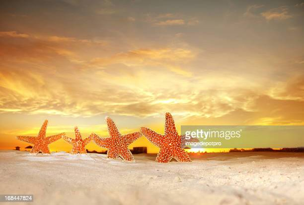 group of starfish on beach over sunset