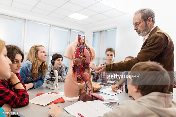 Group of students on an anatomy class in high school.
