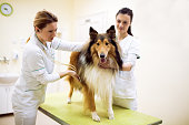 Group of veterinarian examinig dog with stethoscope at clinic