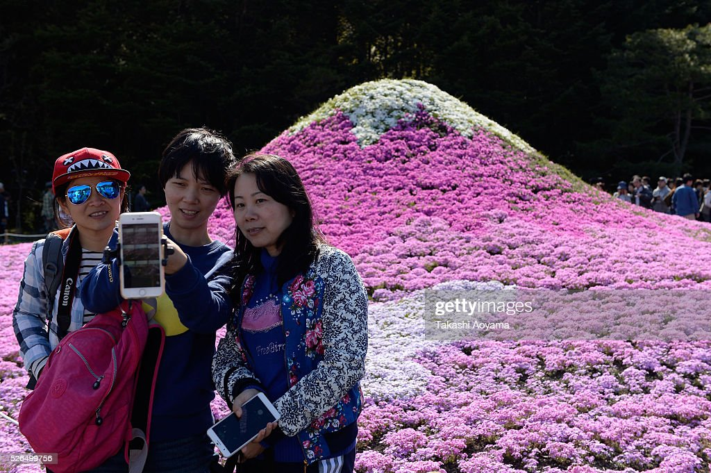 A group of visitor take a selfie in front of Shibazakura (Moss phlox) during the Fuji Shibazakura Festival at Ryujin-ike Pond on April 30, 2016 in Fujikawaguchiko, Japan. About 800,000 mos phlox flowers are in full bloom at the festival held near the Mt. Fuji.