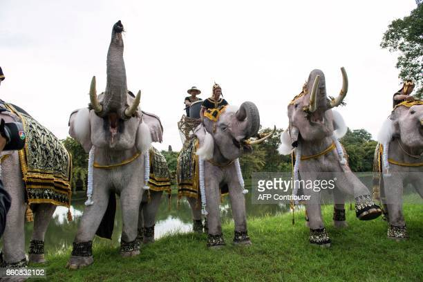 A group of white elephants trumpet under command of their handlers during a ceremony for the late Thai King Bhumibol Adulyadej marking one year since...