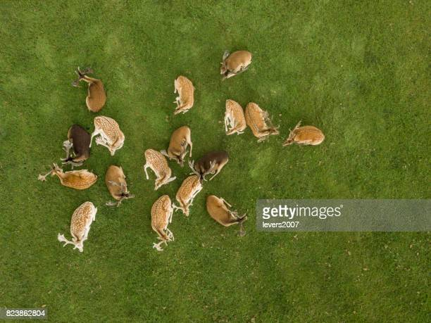 A group of wild deer in a group together