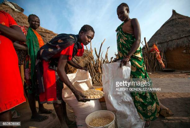 A group of women share maize distributed as food aid in Ngop in South Sudan's Unity State on March 10 2017 The Norwegian Refugee Council distributed...