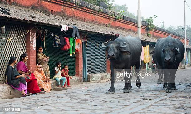 A group of women watch buffaloes walk by on the street in a slum on December 11 2013 in Kolkata India Almost one third of the Kolkata population live...