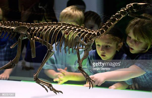 A group of young children view a dinosaur skeleton during a new exhibition titled Dinosaurs at the Australian Museum on March 14 2008 in Sydney...