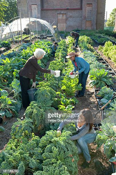 Group Working in an Urban Organic Community Garden
