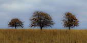Grouping of trees with overcast clouds in the winter of 2018 in the Tallgrass Prairie Preserve in Pawhuska, Oklahoma