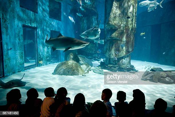 A groups of Year 2 pupils from Millfields Community School are silhouetted as they gaze at sharks circling in the predator tank at The London...