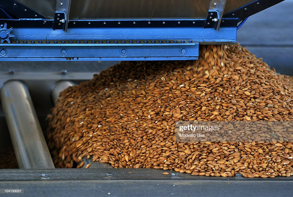 A grower drops off a load of almonds at Blue Diamond Growers plant in Salida California September 1 2010