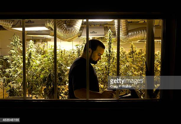 Grower Joe Rey is seen from a viewing corridor whole working in a flower room at 3D Denver Discreet Dispensary in Denver CO December 04 2013
