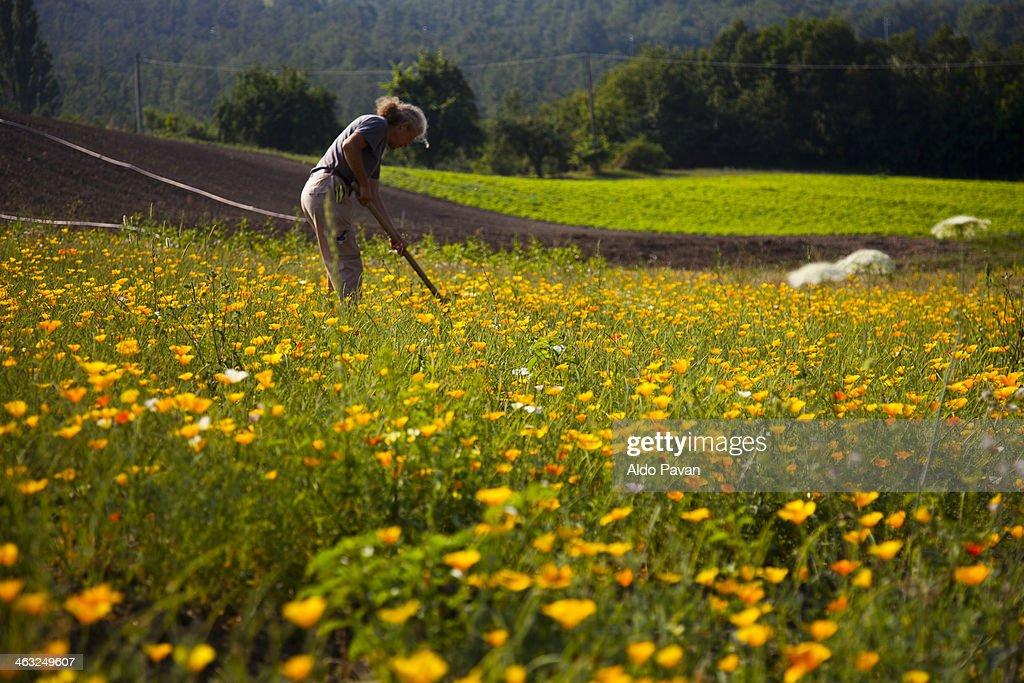 Grower of Eschscholzia Californica