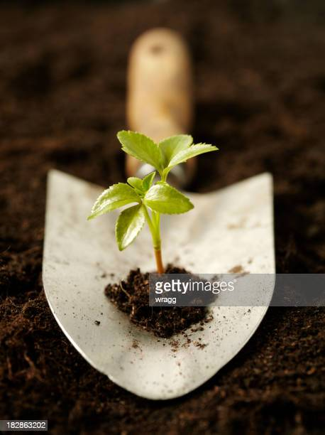 Growing a Seedling in Organic Soil