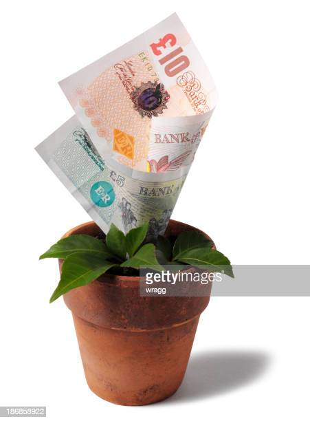 Growing British Currency in a Terracotta Plant Pot