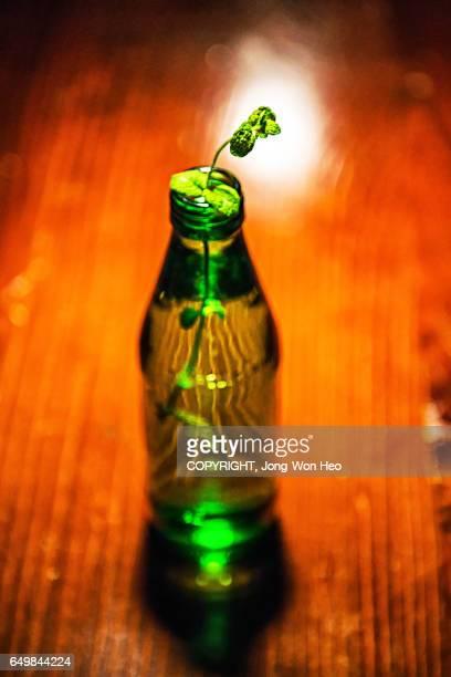 Growing bud in the bottle
