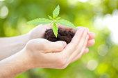 Growing crop in human hands.