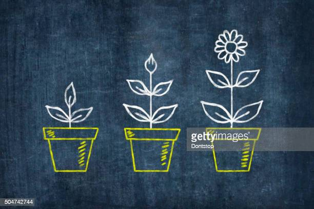 Fleurs de croissance sur Tableau noir