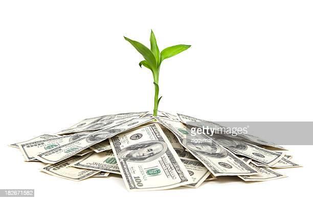 Growing on Money