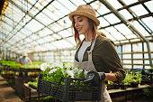 Pretty gardener with white petunias in greenhouse