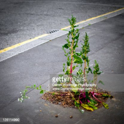 Growing : Stock Photo