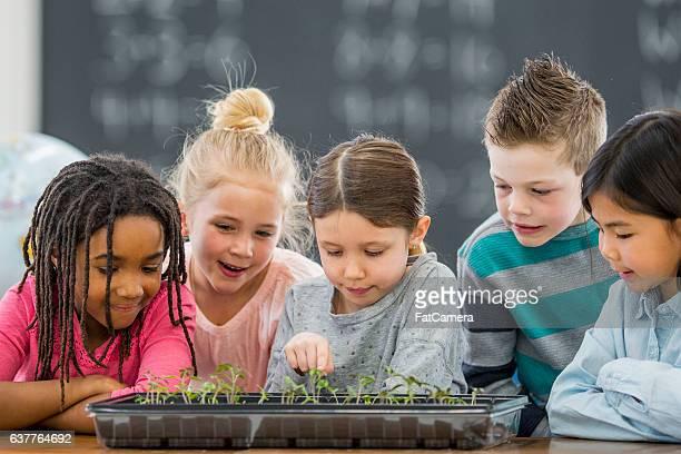 Growing Plants in Class
