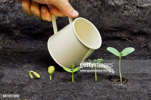 growing plants : Stock Photo