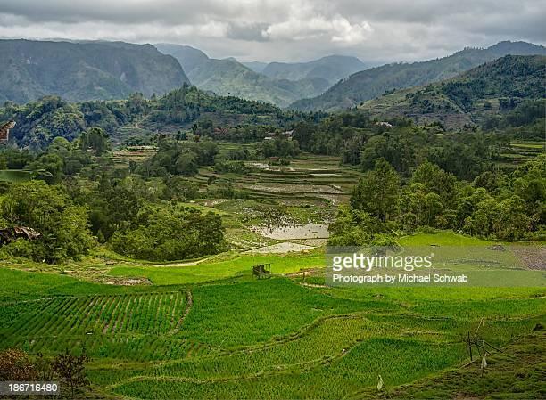 Growing rice in Toraja