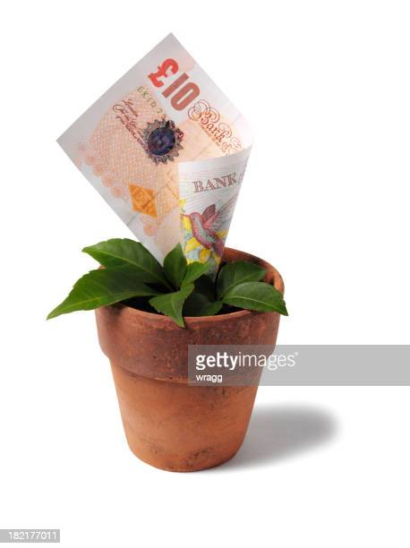 Growing Ten Pound Note in a Plant Pot