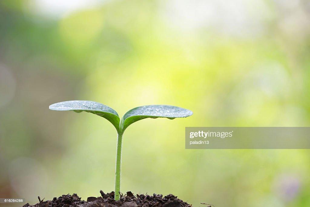 Growing tree : Stock Photo