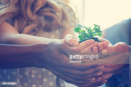 Growth concept. Group holding a seedling plant.