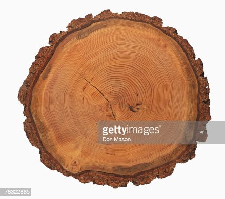 Growth rings of a tree : Stock Photo