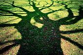 Gruesome tree shadow