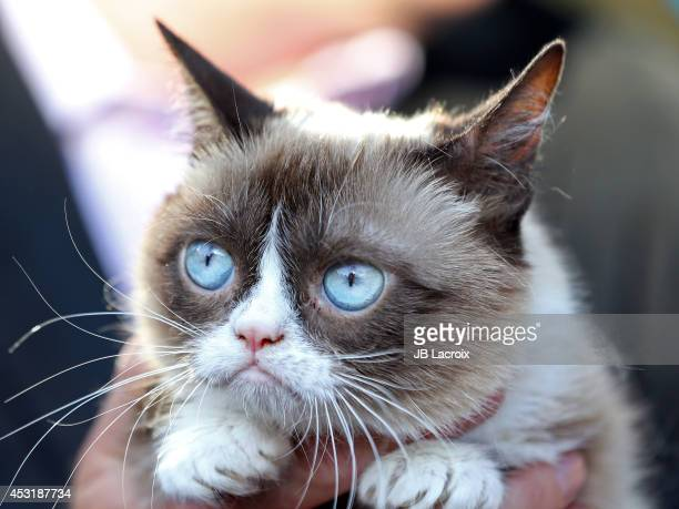 Grumpy Cat arrives at 'The Grumpy Guide To Life Observations By Grumpy Cat' Book Launch Party at Kitson on August 4 2014 in Santa Monica California