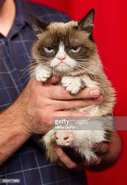 Grumpy Cat at her animatronic launch at Madame Tussauds San Francisco on December 8 2015 in San Francisco California