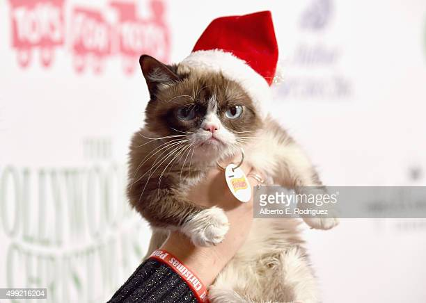 Grumpy Cat attends 2015 Hollywood Christmas Parade on November 29 2015 in Hollywood California