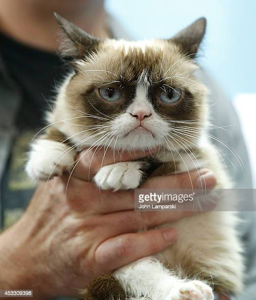 Grumpy Cat attends Grumpy Guide to Life Observations from Grumpy Cat book event at Barnes Noble Union Square on August 7 2014 in New York City