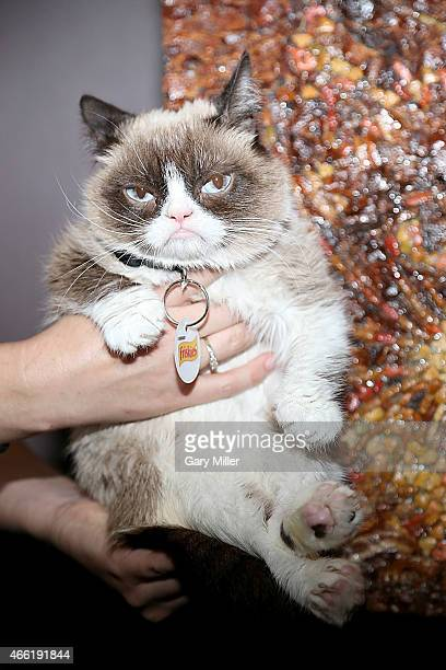 Grumpy cat attends South by Southwest at Haus of Bacon on March 13 2015 in Austin Texas
