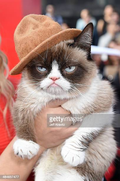 Grumpy Cat attends the 2014 MTV Movie Awards at Nokia Theatre LA Live on April 13 2014 in Los Angeles California